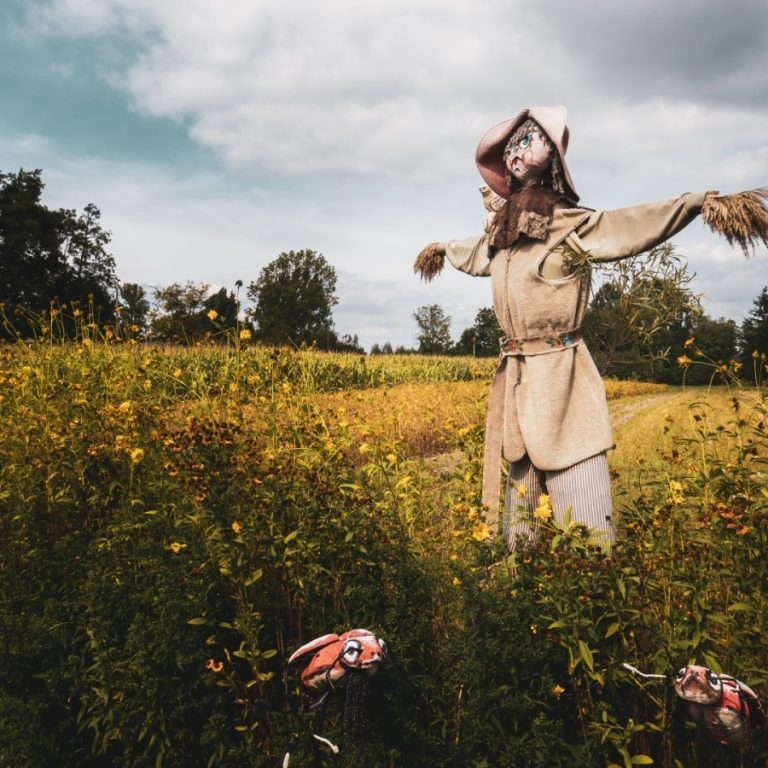 new_Scarecrows (1)